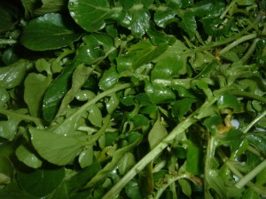 Watercress (Nasturtium officinale) is a dark green vegetable with rounded leaves attached to a long stem. From HealthAliciousNess.com. Image Credit: Masparasol, Wikimedia Commons.