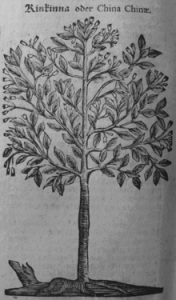 p>Illustration of the Cinchona tree from Theodor Zwingler's herbal (1696) Wikimedia Commons