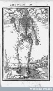 A representation of the nervous system from Carolus Stephanus, De dissectione partium corporis humani (Paris, 1545), p.59. Image Credit: Wellcome Trust Images Collection.