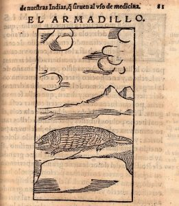 El armadillo. Image courtesy of the John Carter Brown Library, Providence, Rhode Island, USA.